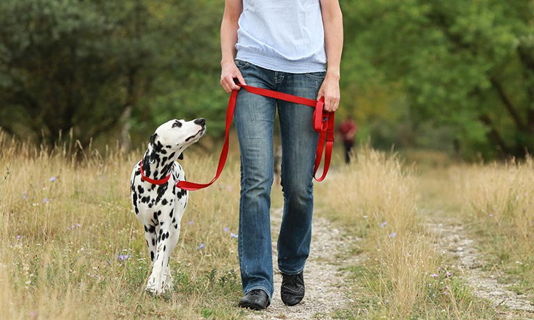 Suzanne walking dalmatian dog